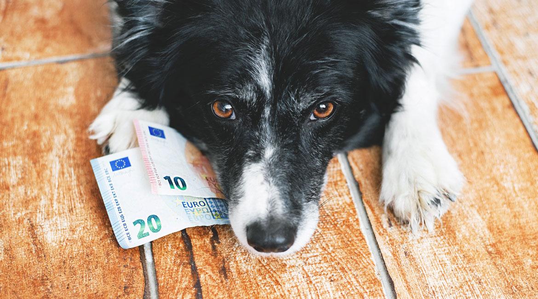 coûte l'assurance animal de compagnie